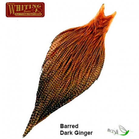 Cuello Whiting Bronce