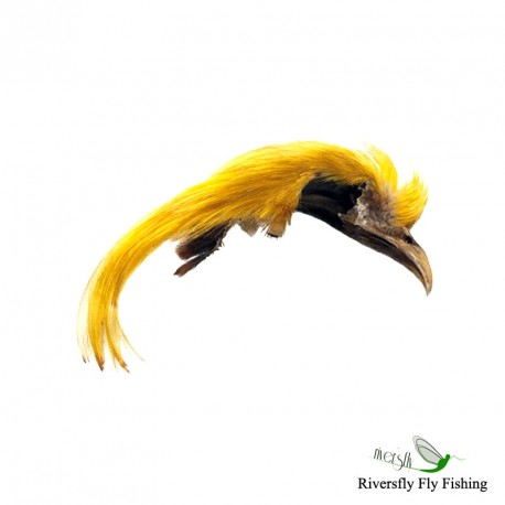 Golden Pheasant Topping Crest. 1st quality (Dyed)