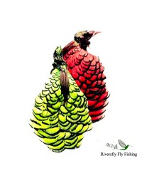 Amherst Pheasant Head and Crest