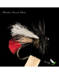 Attractor Peacock Black