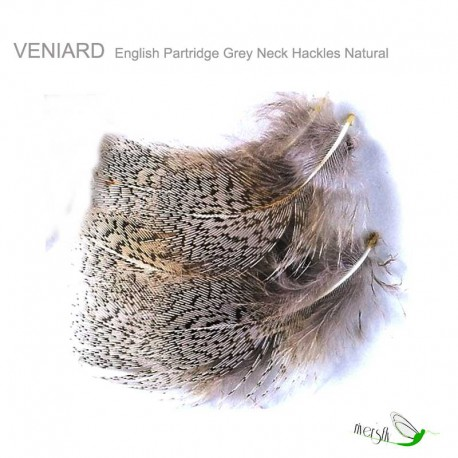 Perdiz Inglesa Veniard Grey Neck Natural