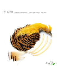 Golden Pheasant Complete Head by Eumer